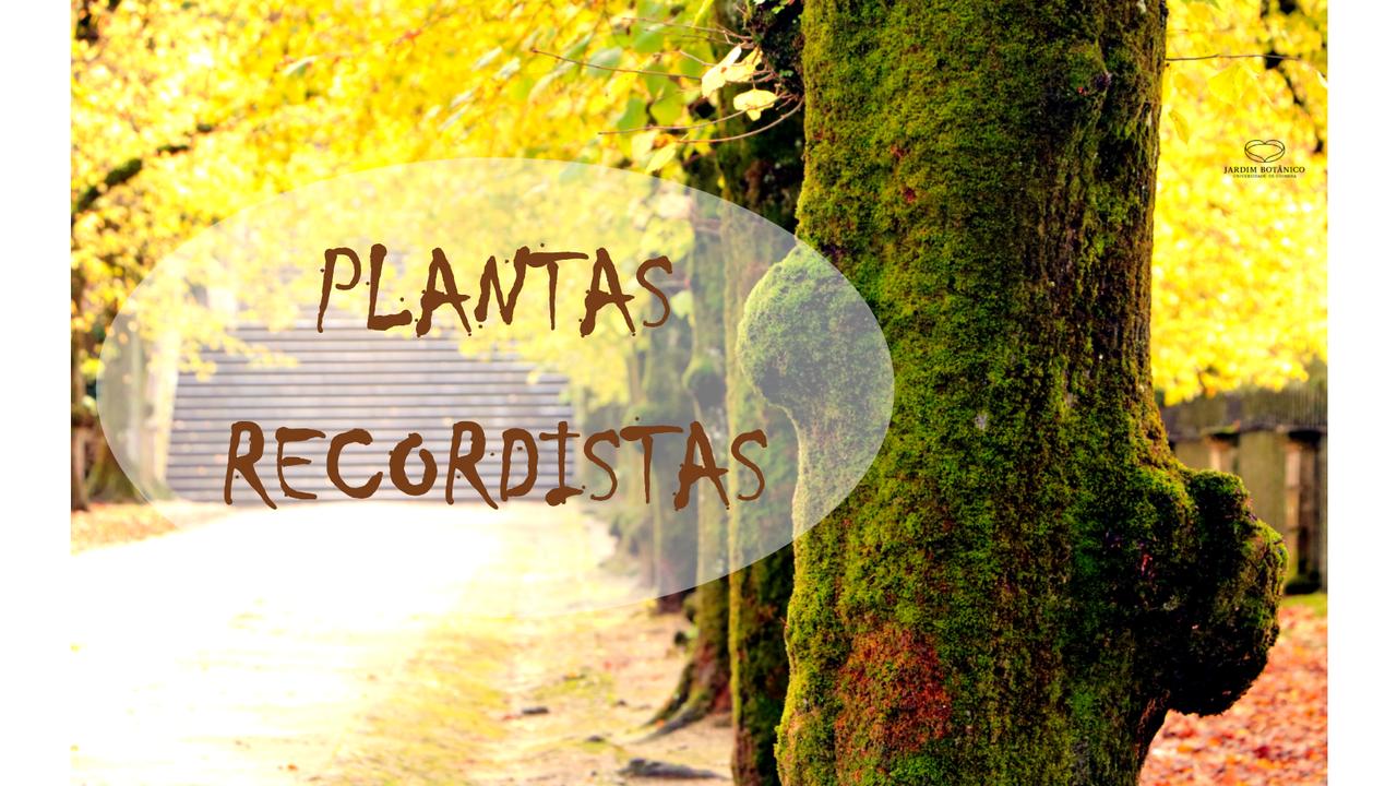 Plantas recordistas do Jardim Botânico da Universidade de Coimbra