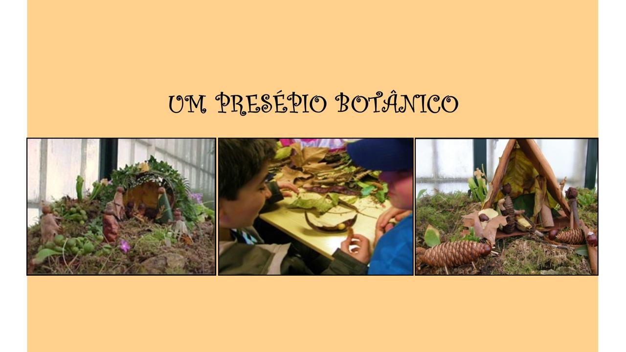 Um Presépio Botânico