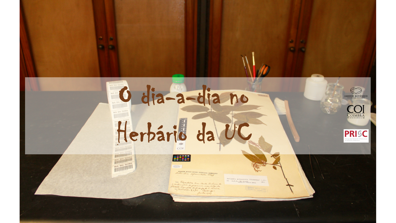 O dia-a-dia no Herbário da Universidade de Coimbra