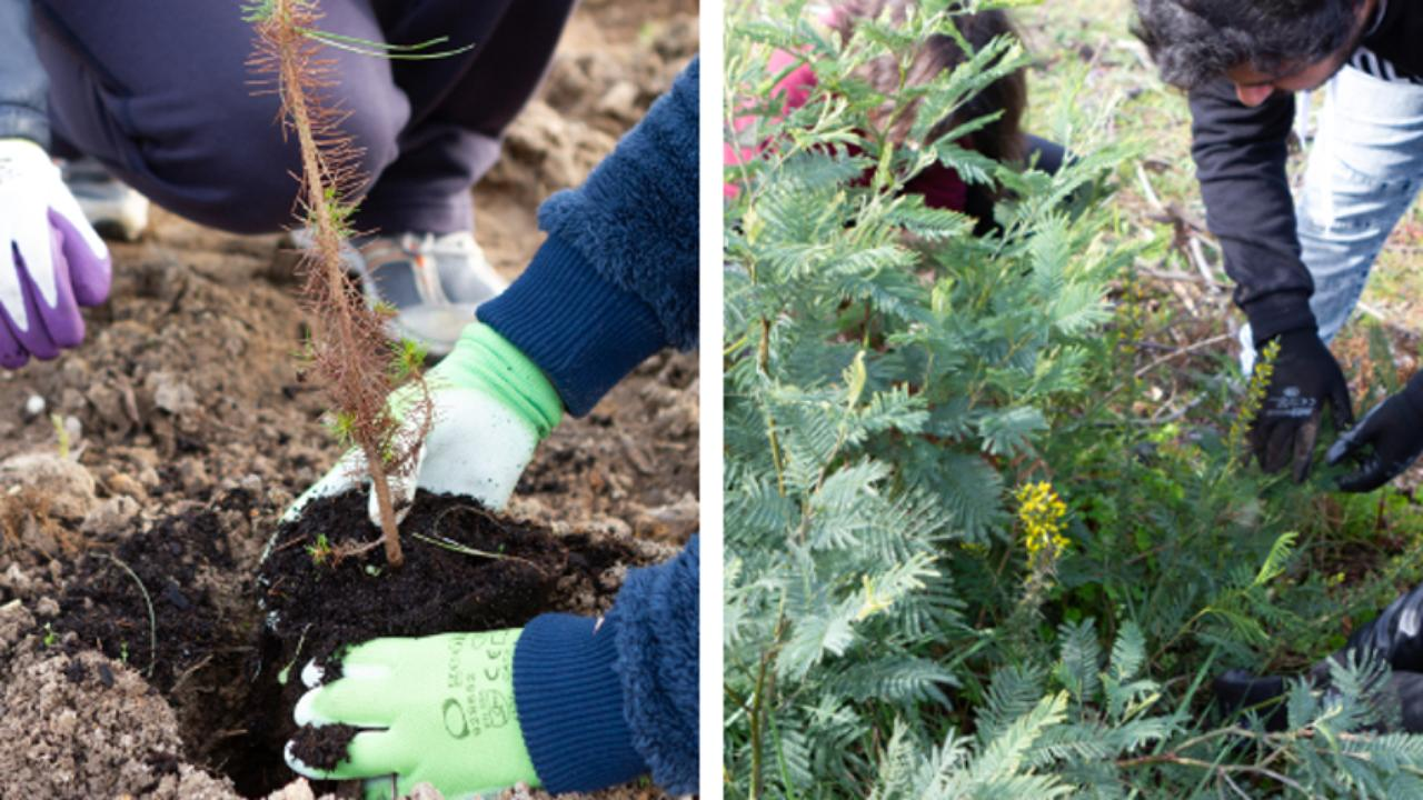 UC.Plantas – Saber plantar o futuro