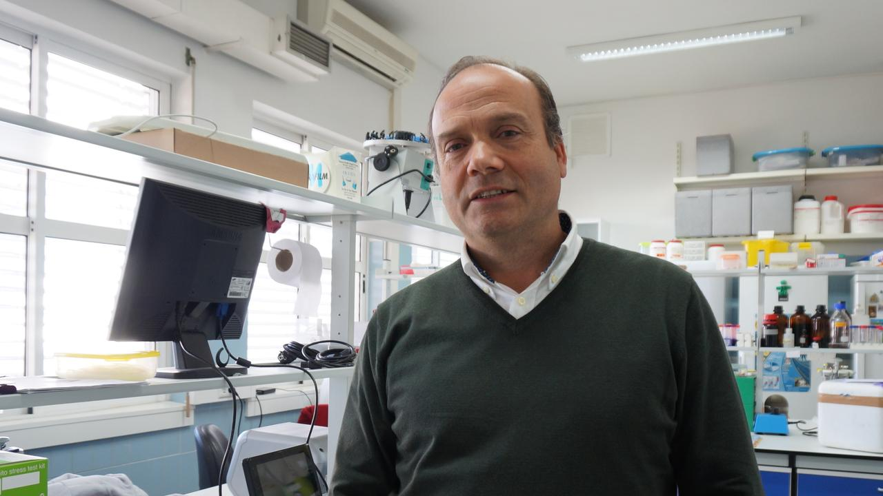 Carlos Palmeira